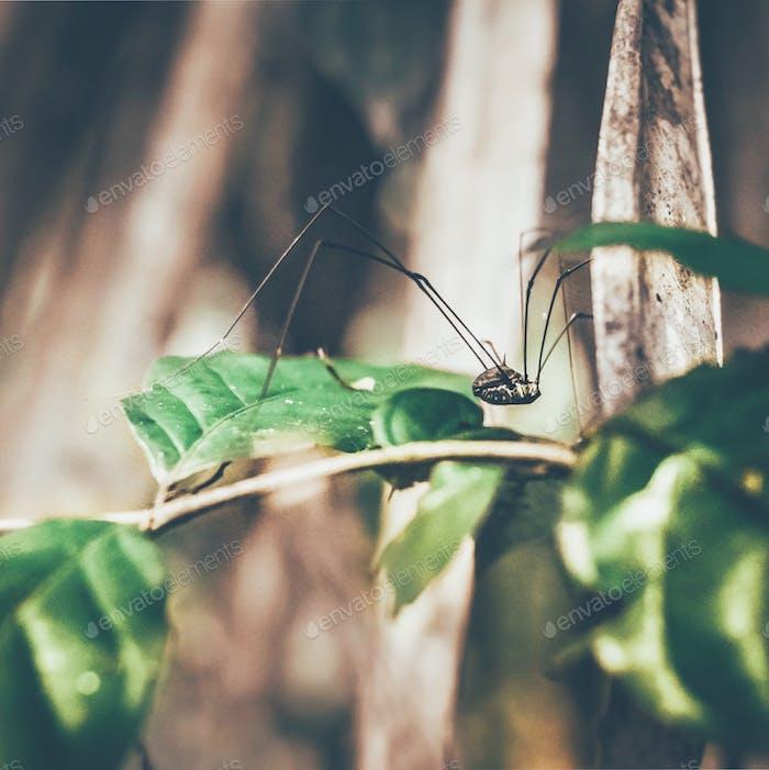 Taschen und Insekten