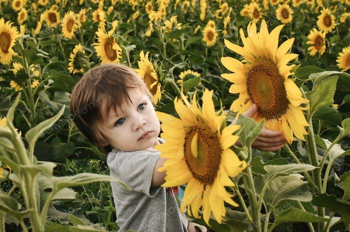 Cute toddler boy admiring sunflowers