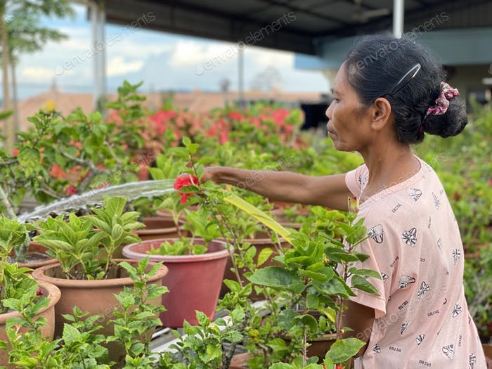 Asian woman watering the plants