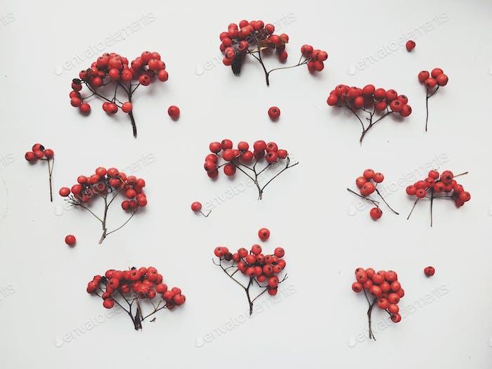 Berries. Autumn flatlay