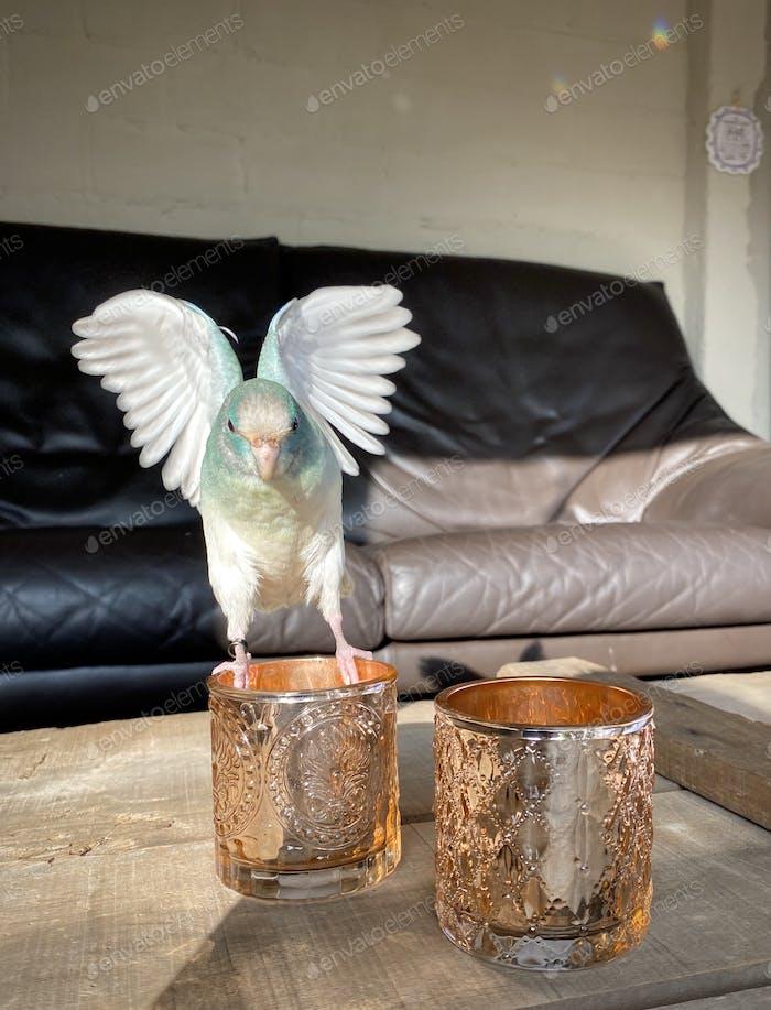 Blauer Papagei mit gespreizten Flügeln landet auf einem Kerzenhalter