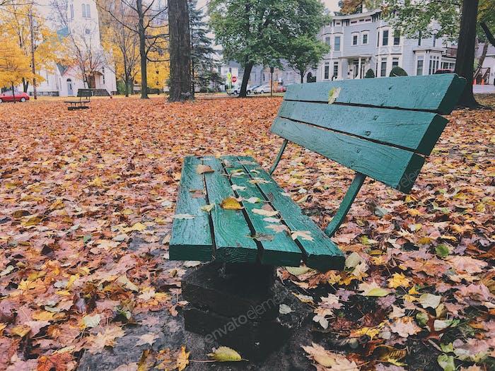 Eine grüne Bank sitzt im Herbst in einem Park mit bunten gefallenen Blättern.