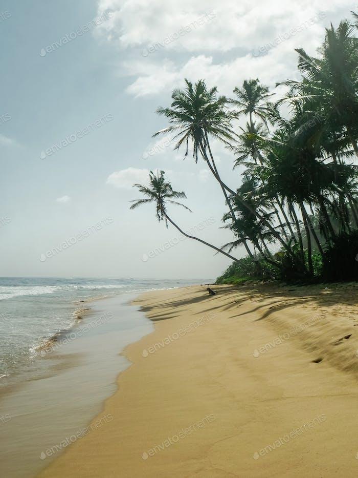Palmen am leeren Strand