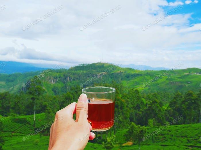 Grab a cup of Ceylon black tea and enjoy this beautiful landscape of tea plantation