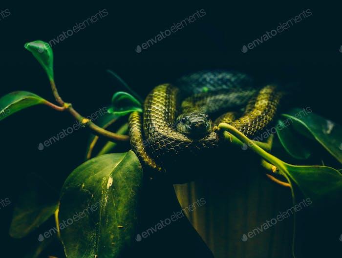 // favorite reptile to shoot //