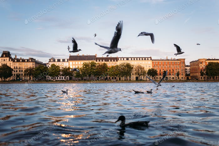 Copenhagen Birds on the Canal