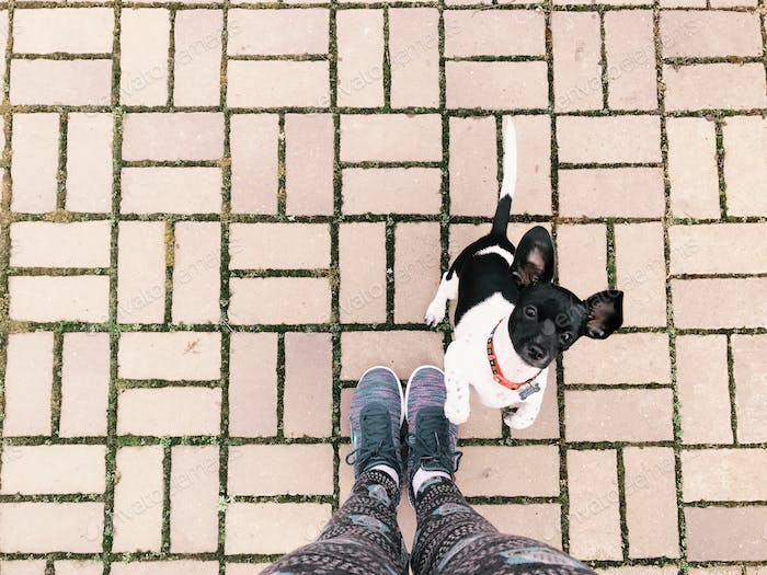 Running shoes and puppy against brick ground.