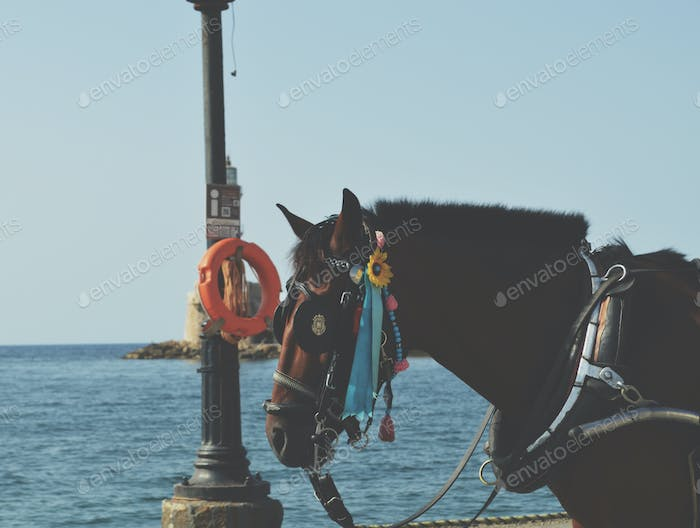 Horse at the old port of chania, greece