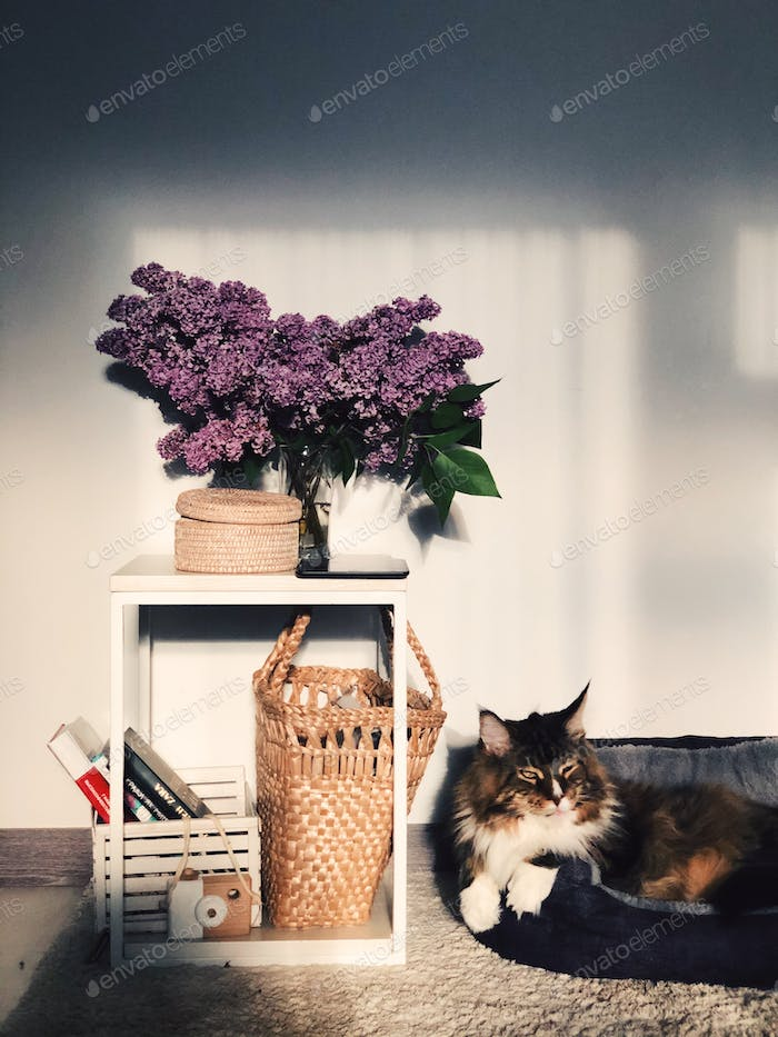 Cute home decor with flowers and big cat Atmosphere at home