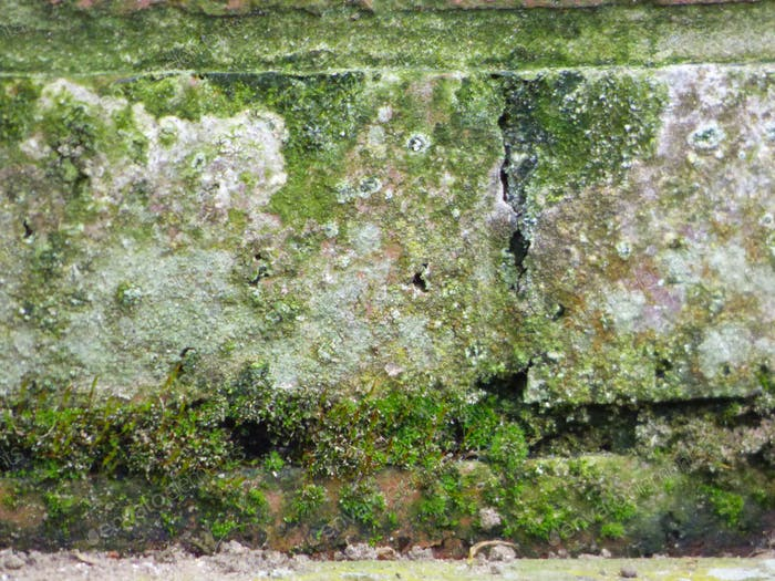 HOME AND PROPERTY DAMAGE    texture decay moss              $