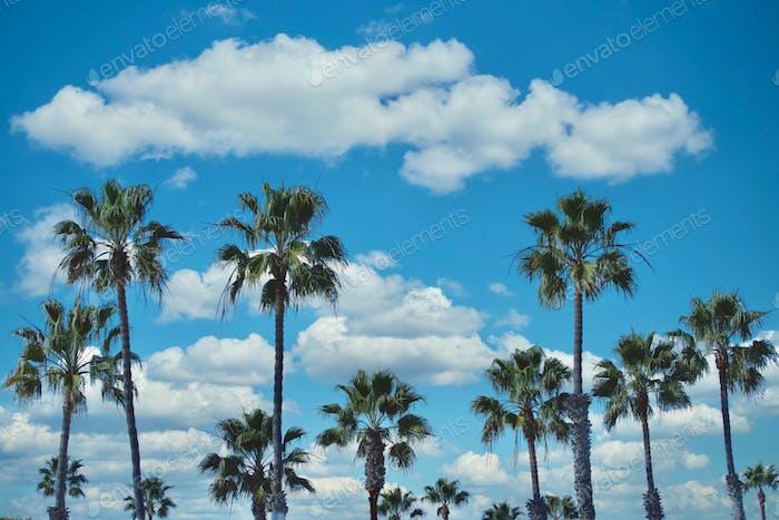 Beautiful palm trees on a beautiful day