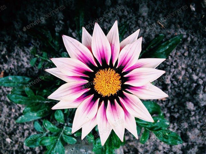 Close up of garden flower