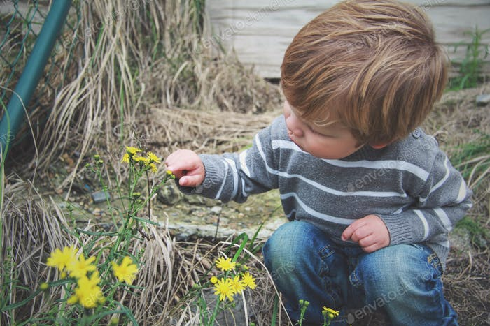 Discovering flowers