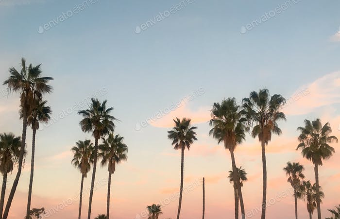 Palm trees at sunset beautiful sky with room for copy