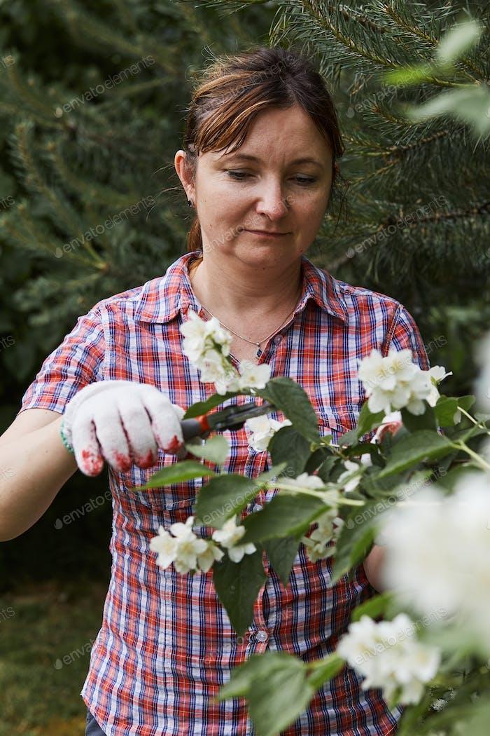 Frau, die in einem Hinterhof Garten Trimmen und Schneiden von Pflanzen mit Gartenschere