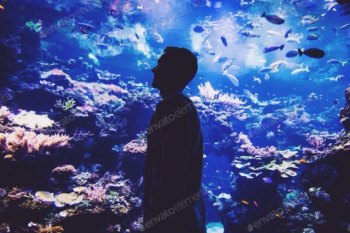 Aquarium af