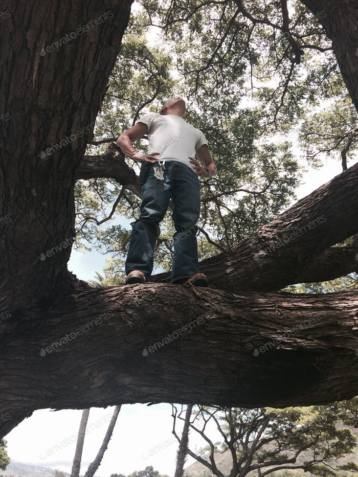 Climbing a magnificent tree with a feeling of awe