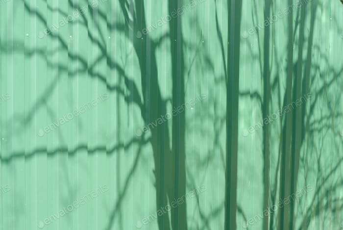 Shadows of the trees on the green wall