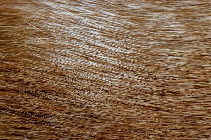 Orange Cat's fur