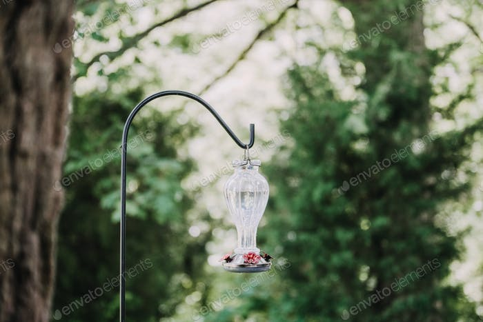 A hummingbird feeder