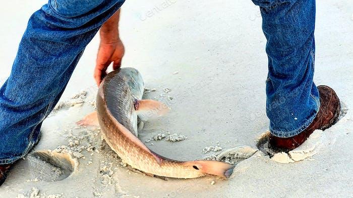 Fish on the seashore...
