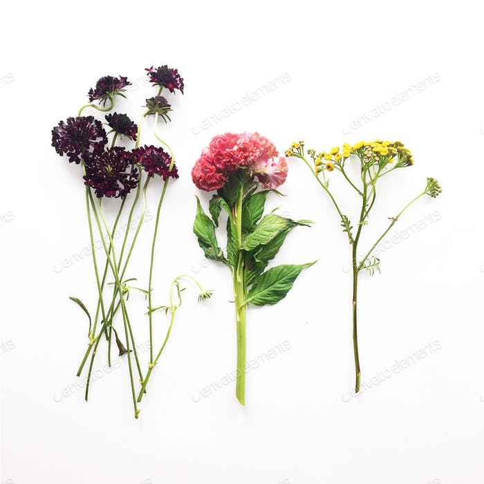 Stems of scabiosa, celosia, tansy flowers on a white background.