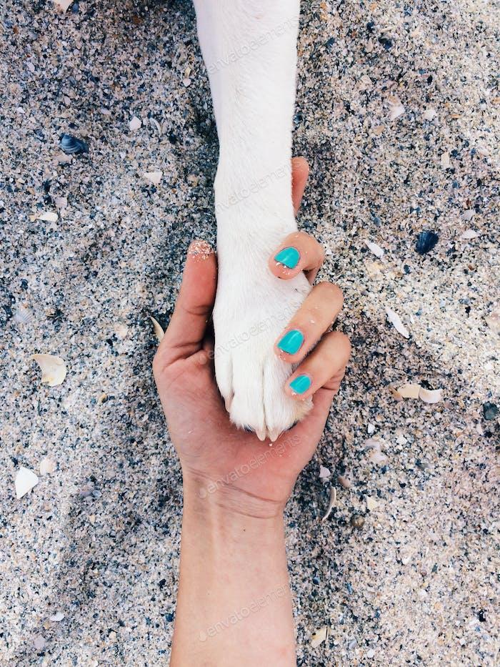 Minimalistische Hundepfote