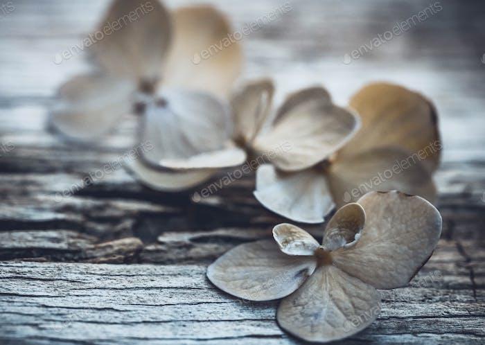 Hortensias de madera desgastada