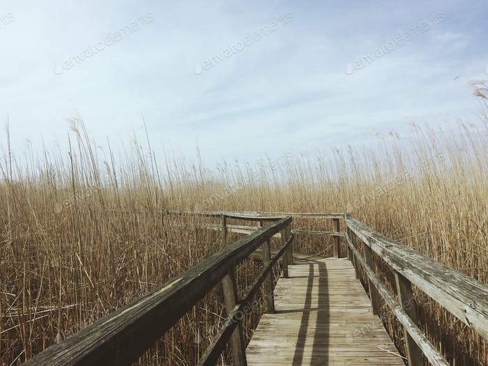 Reeds & Dock - Outer Banks in North Carolina