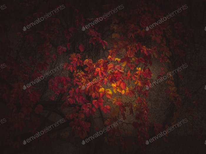 Vineyard in autumn time with beautiful vignette effect