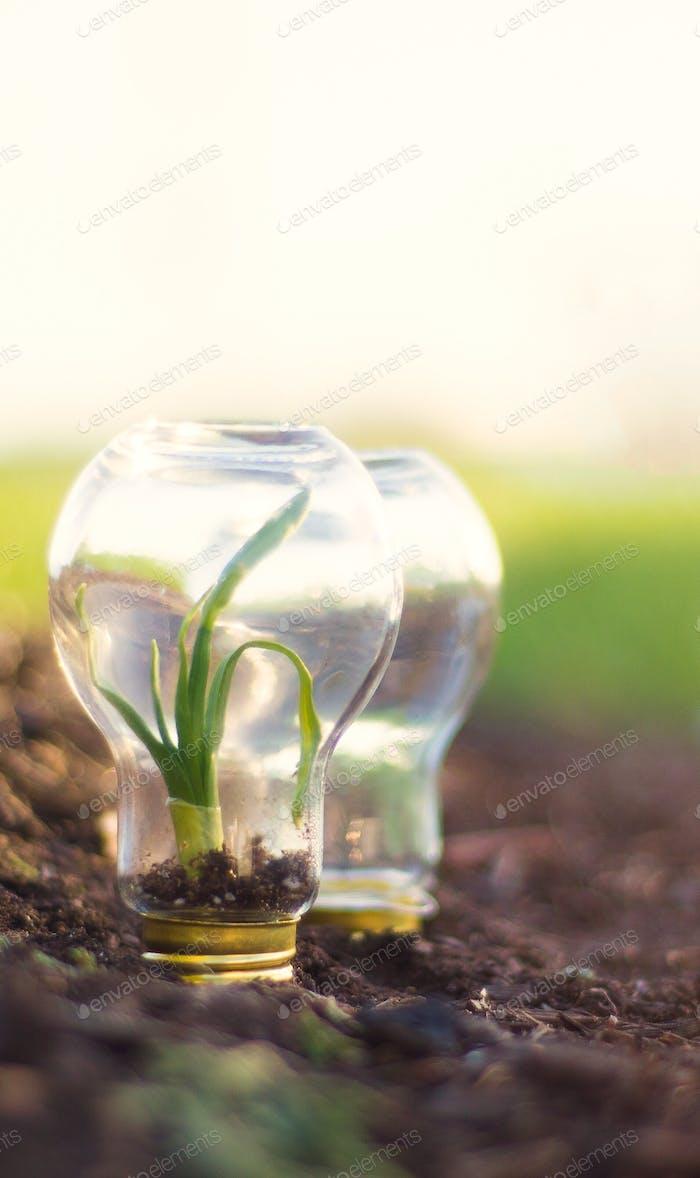 Beginnen Sie mit der Aussaat der Samen, die die Zukunft antreten