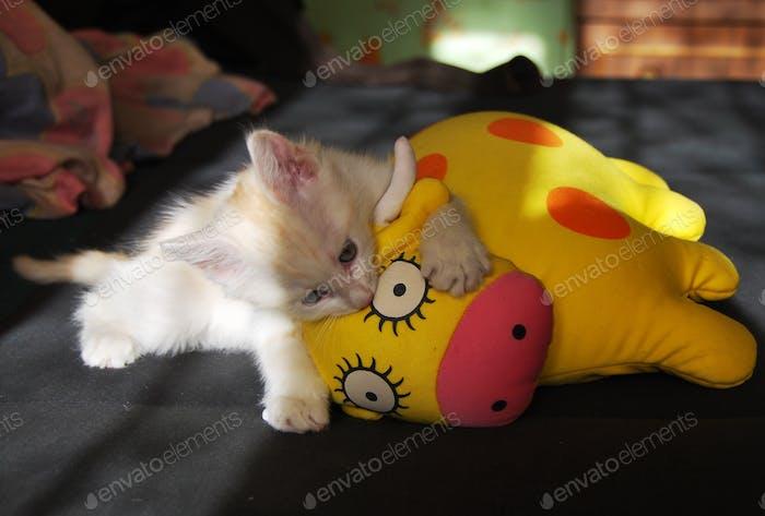 Weißes flauschiges Kätzchen, das eine Spielzeug-Kuh angreift. Kleines Raubtier und es ist Beute