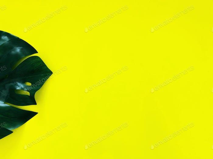 Green Monstera leaf