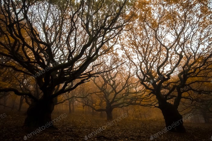 Trees that look like witches brooms in autumn fall