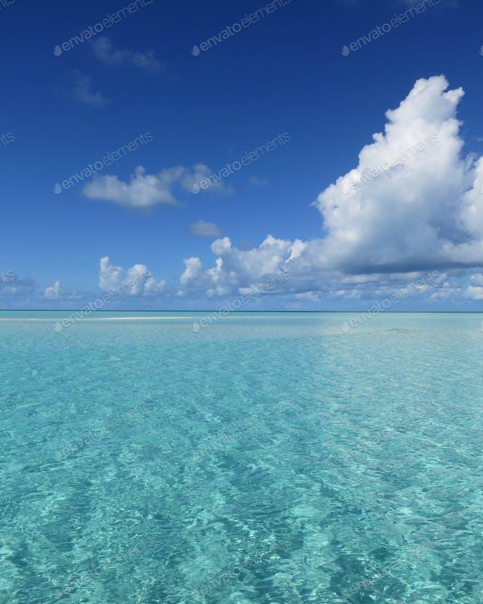 Bahamas natural world