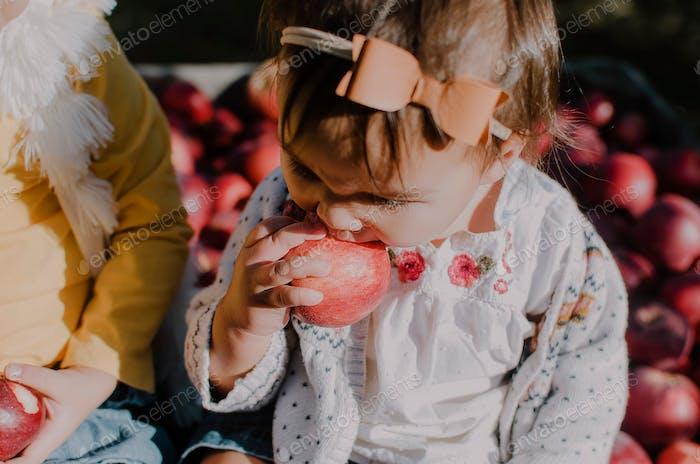 Toddler girl eating an apple