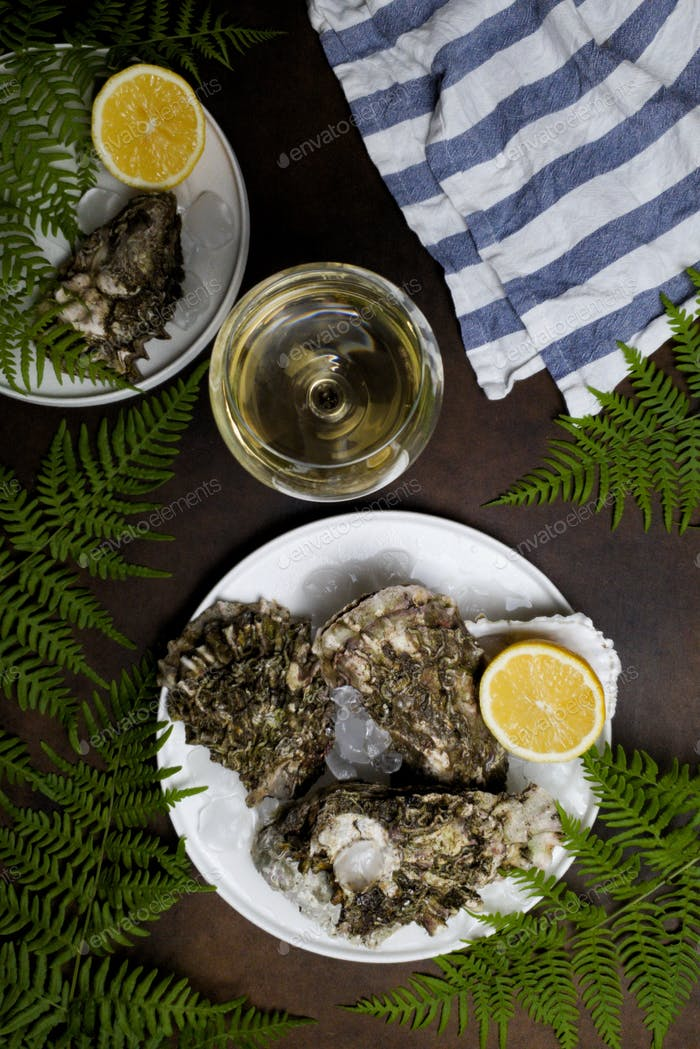 oysters are on a white plate and there is a glass of white wine