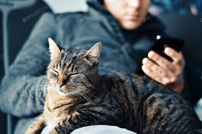 young man, using mobile phone, sitting on sofa, with cat on lap, sleepy cat, happy cat, satisfied ta