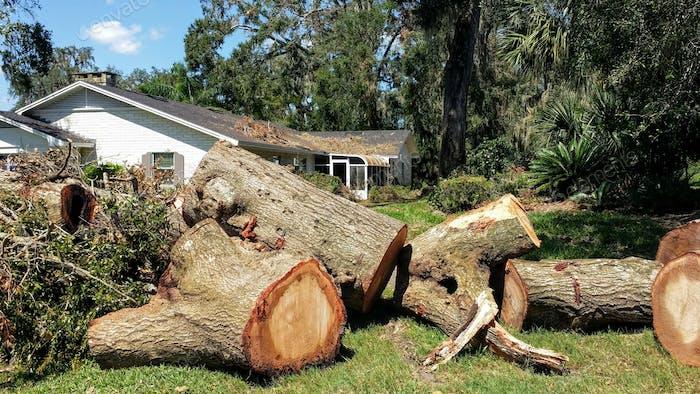 Florida Hurrikan beschädigte Baumentfernung
