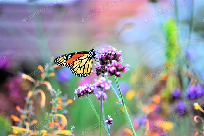 nominated!!  Bright & colorful garden with a monarch butterfly