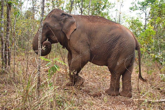 Meeting elephants in Cambodia