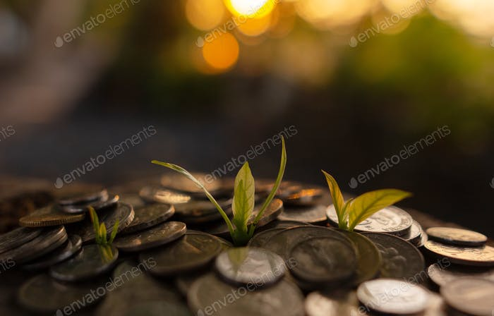 Ahorro y crecimiento de dinero para futuros fondos.