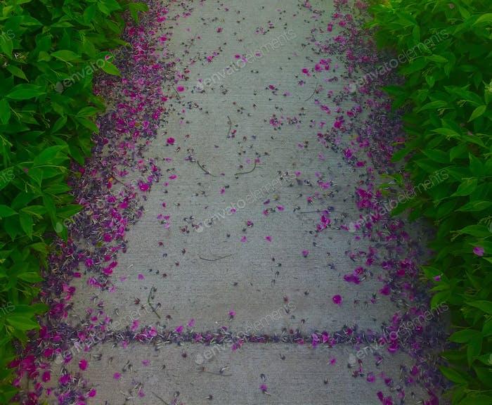 Fallen flower petals on sidewalk