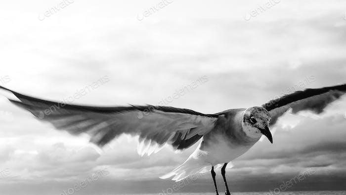 Spreize deine Flügel und flieg weg...