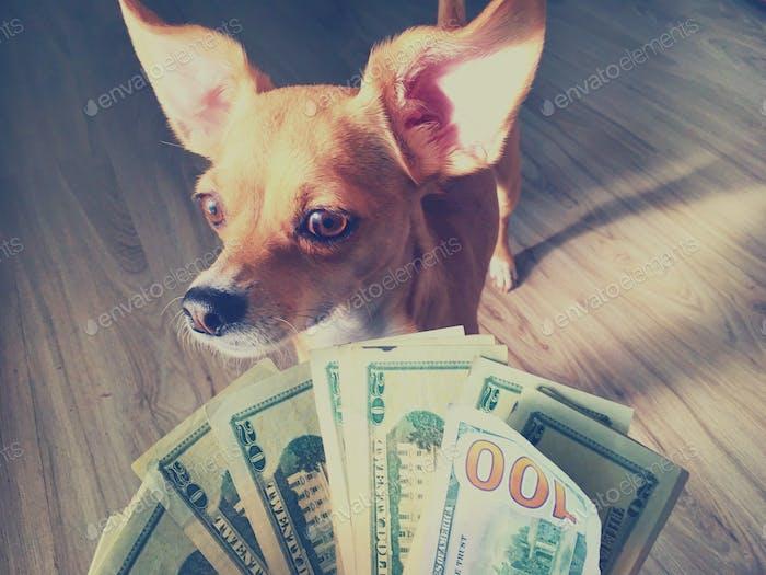 That's dog dollars