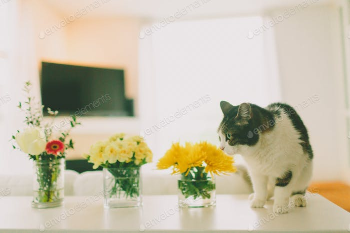 A cat on a counter curiously smelling flowers.