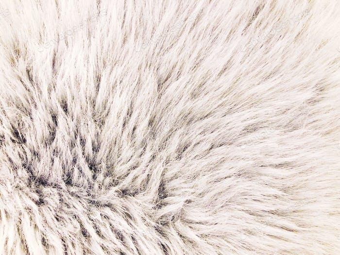 Light grey & furry