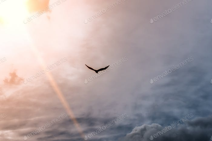 A lone eagle flies from the sun to meet stormy clouds