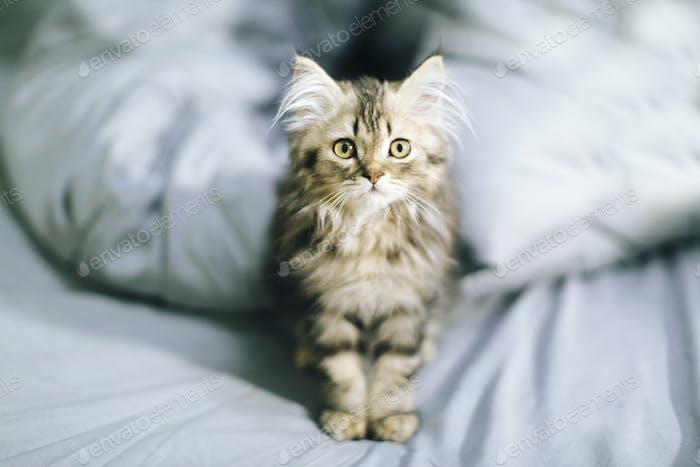 Cama de gatito de pelo largo