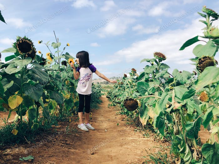 Girl in sunflower row smelling a sunflower